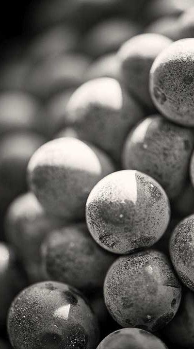 acini d'uva ravvicinati in bianco nero