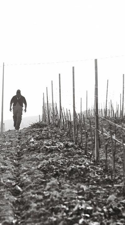 produttori-di-govone_vini_tipici_del_piemonte_potatura_02.jpg