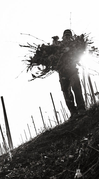 produttori-di-govone_vini_tipici_del_piemonte_potatura_03.jpg